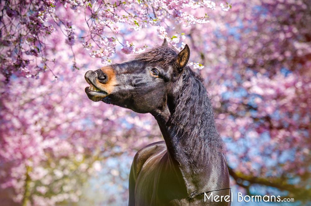 lente bloesem aan de bomen