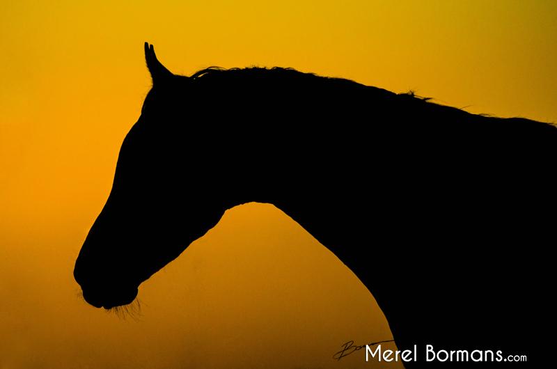 Silhouetfoto van een Arabier met zonsondergang