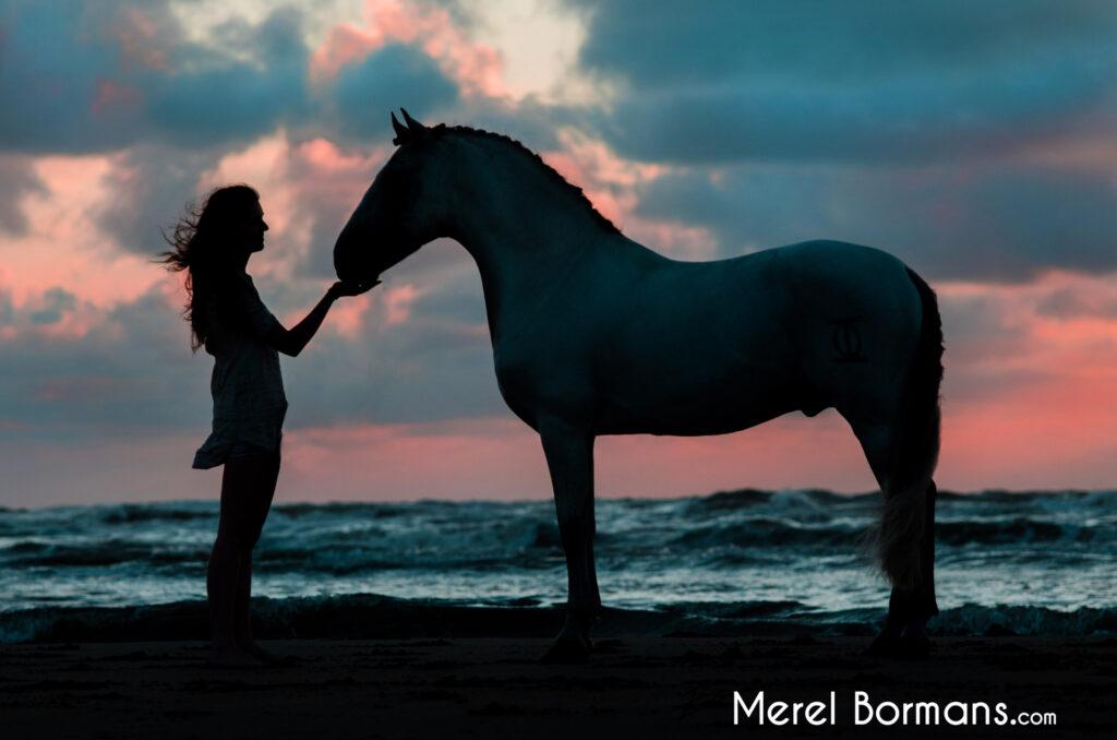 Silhouetfoto van een Spaans paard op het strand