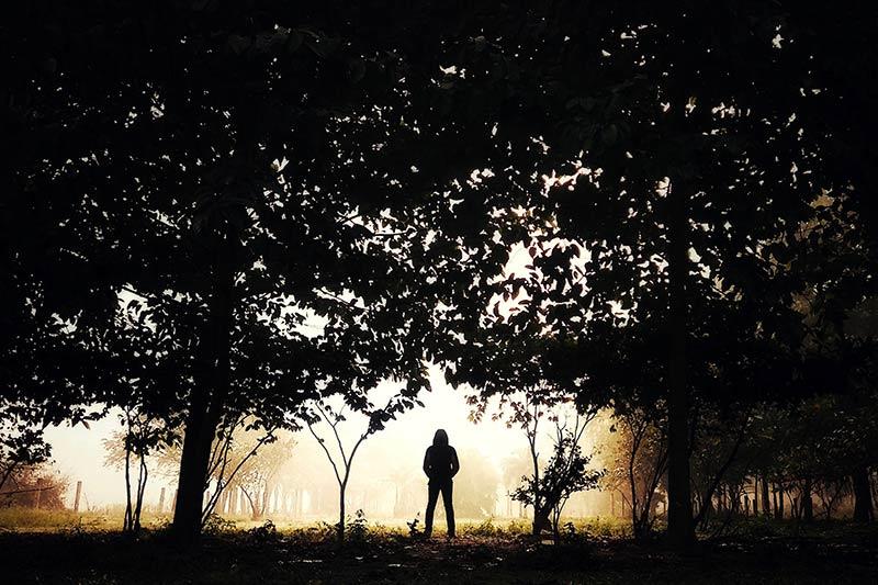 In het bos met een beetje mist kan je ook hele bijzondere silhouet foto's maken