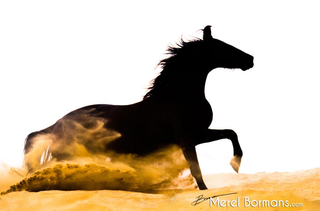Silhouetfoto van een Marwari paard in de woestijn